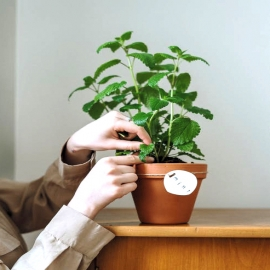 🌿 ¿Quién es fan de las plantas aromáticas como la menta en casa? A parte de desprender un agradable aroma vigorizante, la menta ayuda a la digestión, es antiinflamatoria, antiséptica y expectorante entre muchas otras propiedades. 🌟  ➡️ En Dimefar nos gusta tanto, que ¡la hemos incorporado en infusiones, tés y hasta comprimidos! ¿Por algo será, no?  #DimefarForYou